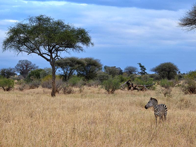 Einzigartige Tierwelt